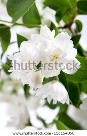 a branch of white flowers