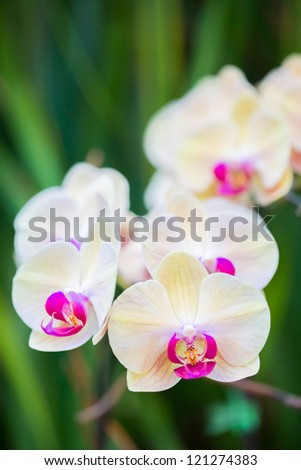 a branch of white orchids - stock photo