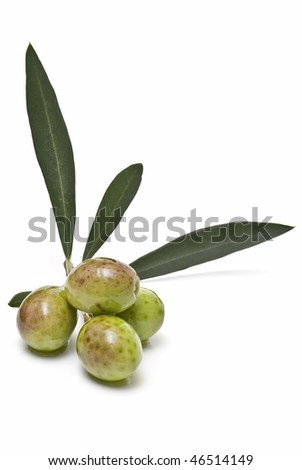 A branch with olives and leaves.