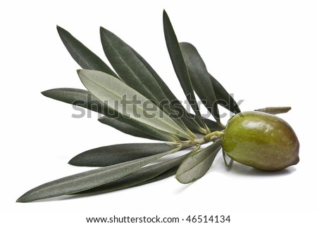 A branch with one olive an leaves.