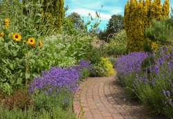 A Brick Pathway Edged with Lavender Plants (Lavandula) and Sunflowers (Helianthus) in a Country Cottage Garden in Rural Devon, England, UK