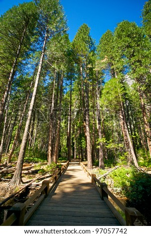 A bridge along the trail leads to a path through tall pine trees. - stock photo