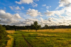 A bright autumn day in Epping forest in the eats of London
