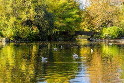 A bright Autumn day watching the ducks in St Stephen's Green Park, Dublin, Ireland