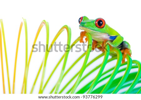 A bright, colorful red eyed tree frog climbing on a spring, coil toy.