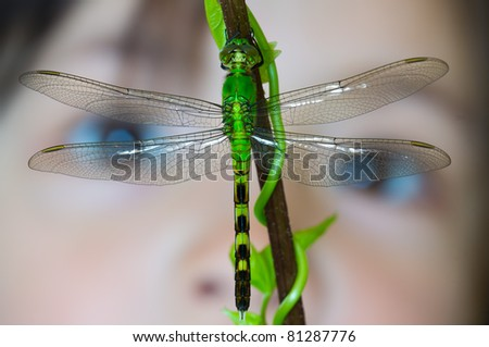 A bright green dragonfly with a child's face in the background - stock photo