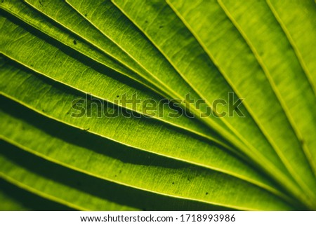 A bright green leaf pattern texture illuminated by the sun the sun on the reverse side. Selective focus macro shot with shallow DOF Stock photo ©