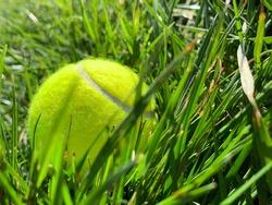 A bright neon tennis ball in the luscious green grass