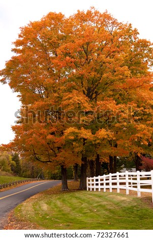 A bright orange maple tree in a country setting during the autumn months.
