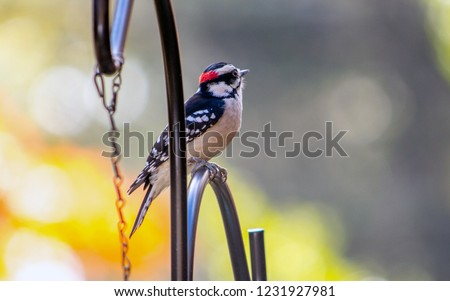 A bright, red headed woodpecker sits on a metal perch against a golden fall back drop #1231927981
