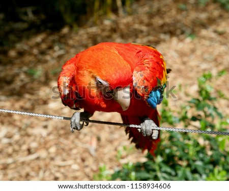 A brightly coloured Macaw posing for the camera #1158934606