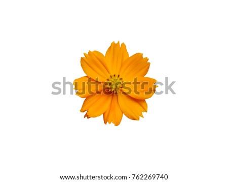 A brightly dark yellow flowers white backgroundipping paths ez a brightly dark yellow flowers white backgroundipping paths mightylinksfo