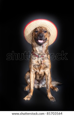 A brindled plott hound wearing a straw hat