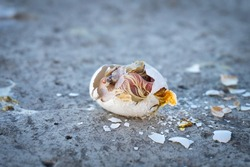a broken pigeon egg with a dead chick on the pavement