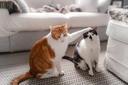 a brown and white cat puts his paw on top of a black and white cat's head