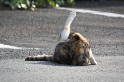 A brown and white cat sticking their back leg up in the air in an empty outdoor car parking lot