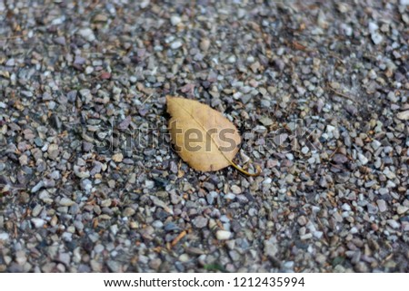 A brown autumnal leaf lying on grey gravel with the veins clearly visible #1212435994