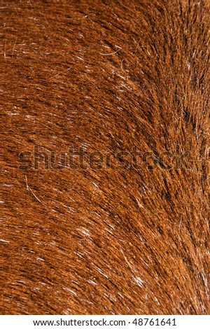 a brown background with a hairy texture #48761641