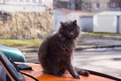 A brown cat sits on the hood of an old orange car. Sleepy ugly pet resting