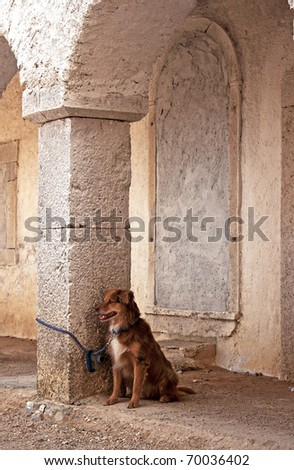 A brown dog waiting for his owner