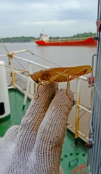 A brown grasshopper perched on a fingers in the port