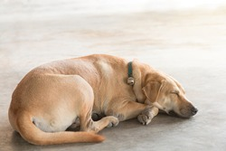 A brown homeless stray dog is sleeping on the warm cement floor.
