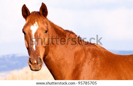 A brown horse facing the camera