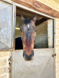 A brown horse saying hello