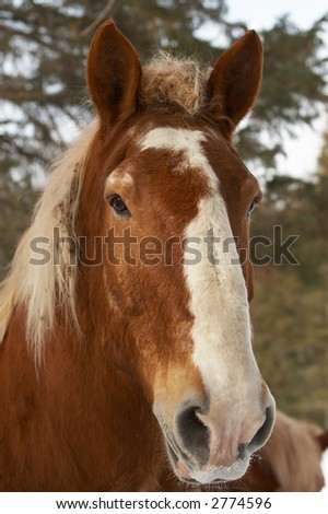 A brown horse with trees. #2774596