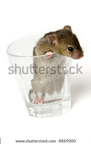 http://image.shutterstock.com/display_pic_with_logo/64665/64665,1201314045,1/stock-photo-a-brown-mouse-in-a-shot-glass-8869000.jpg