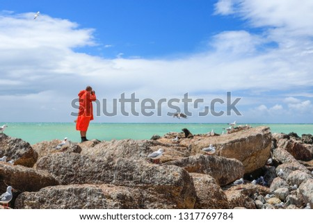 A buddhist monk in orange color clothing standing on the top of boulders and taking picture of a seal and red-billed gull with dslr camera in Oamaru near Dunedin, South Island New Zealand