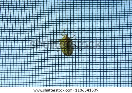 A bug on a net