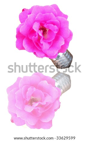 A bulb with a flower, meaning concept of alternative energy and responsibilty in the use of energy