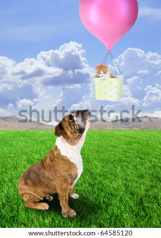 a bull dog and a kitten in a basket
