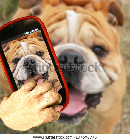 a bulldog close up of his face taking a selfie with a camera cell phone