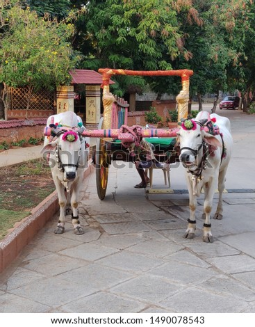 A bullock cart or ox cart is a two-wheeled or four-wheeled vehicle pulled by oxen. It is a means of transportation used since ancient times in many parts of the world.They are still used today  #1490078543