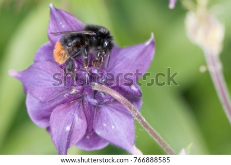 a bumblebee is eating at an flower