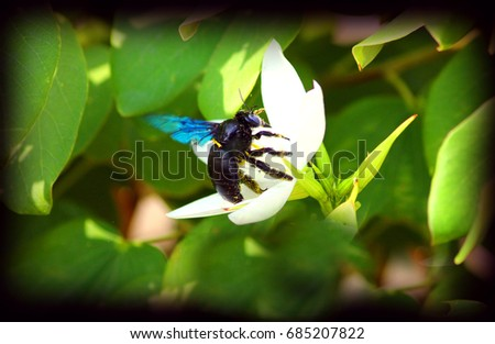 a Bumblebee try to take out nectar from the flower. best for background use.