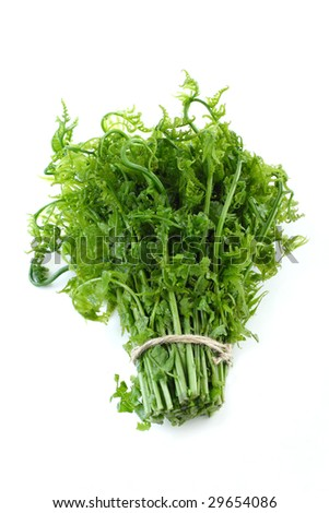 a bunch of Asian wild vegetable fern