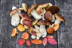 A bunch of autumn edible mushrooms, mostly Boletus Edulis on a wooden surface of an old oak table