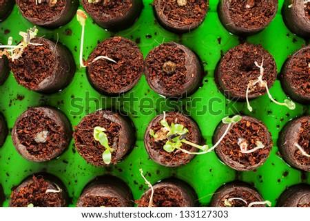 A bunch of baby plants growing inside of pots inside of a greenhouse nursery.