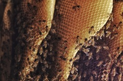 a bunch of bees on the nest make honey