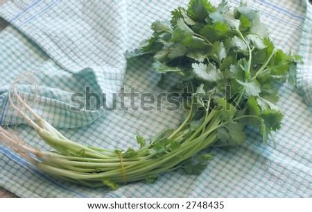 a bunch of coriander