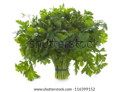 a bunch of flat leaved parsley herb isolated on a white background