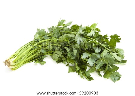 A bunch of fresh coriander isolated over white