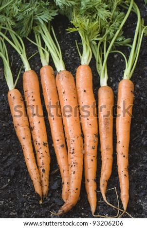 a bunch of fresh harvested carrots laid on the ground