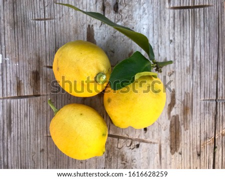 A bunch of fresh lemons freshly collected from the trees in Puglia