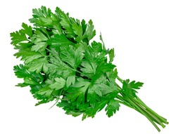 A bunch of fresh parsley isolated on a white background