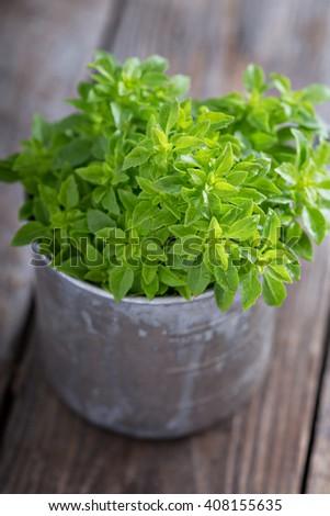 A bunch of fresh Spicy Globe Basil in a metal mug #408155635
