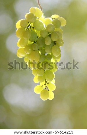 A bunch of green grapes in backlit